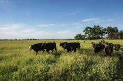 Helstrom Farms